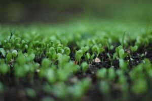 An on-line workshop from VIPRISCAR to reinforce BIOECONOMY in Europe
